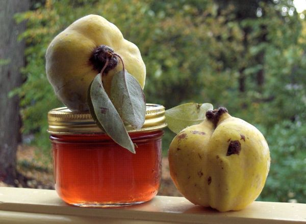 quince jelly made by Deborah Cooke