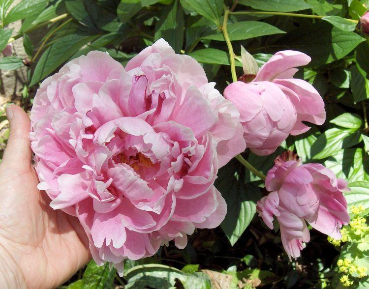 Claire Delacroix's garden